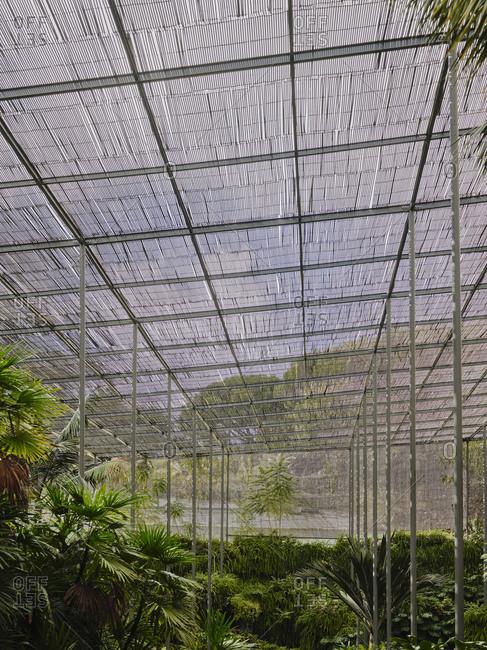 Tree framed at Estufa Fria Botanic Gardens