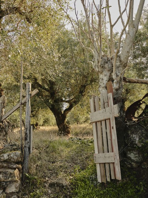 Olive tree through a gate in Portuguese countryside