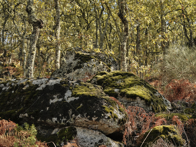 Moss covered boulders in Portuguese forest