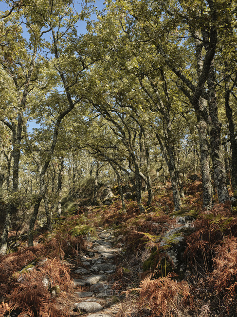 Hiking trail in Portuguese forest on the way to Marvao