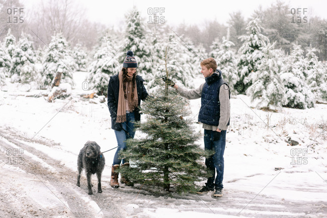 young woman, young man and their dog at Christmas tree farm with dog