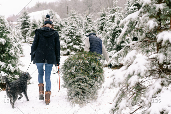 young woman, young man and their dog  with Christmas tree  farm