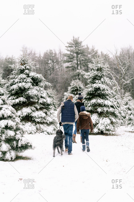 three young people looking for their Christmas  tree on a winter day