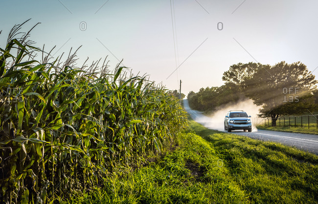 Corn Growing as truck drives by with dust