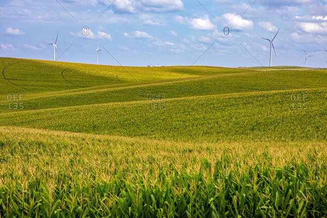 Nebraska corn fields with wind turbines