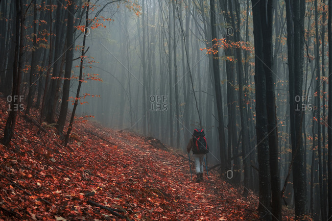 Tourist walks in misty autumn forest