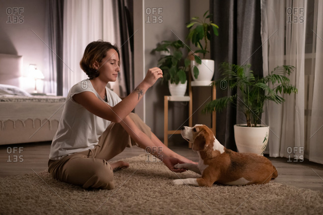 Young woman training dog on floor