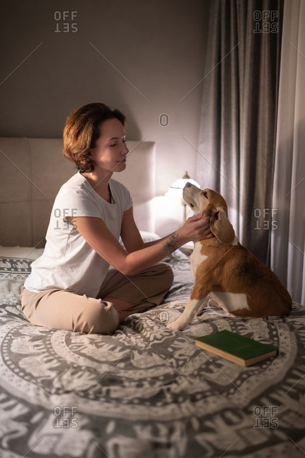 Female owner scratching loyal dog on bed