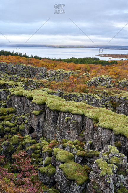 Rocky seashore covered with moss and bushes