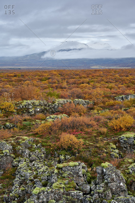 Autumn bushes in highlands in autumn