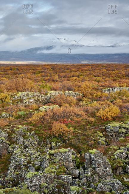 Bushes on rocky ground near mountain