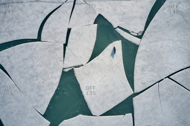 White ice floes with seal