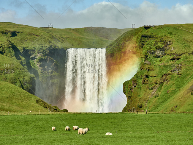 Sheep grazing near hills with waterfall