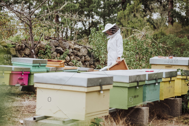 A young woman beekeeper working with honeycomb