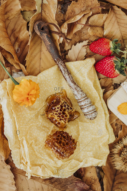 A still life of honey and strawberry in autumn