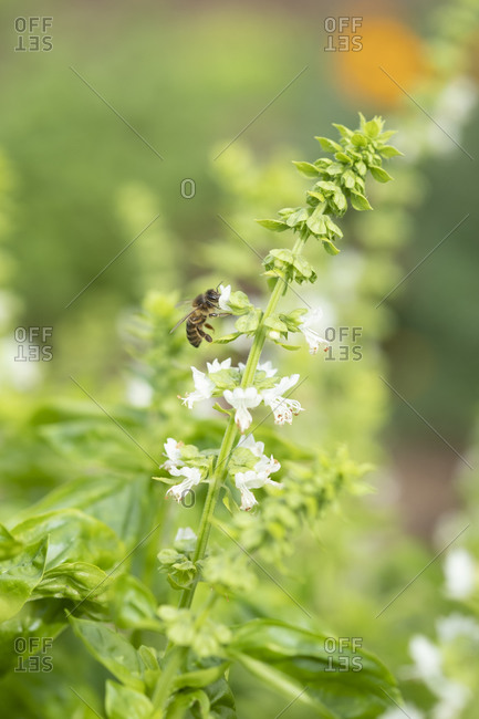 A flowers with a bee and blur background