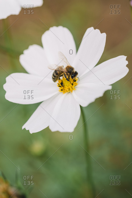 A flower with a bee and blur background