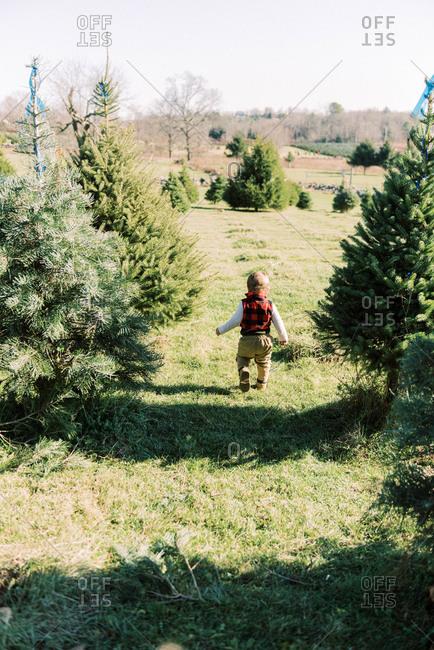 Toddler walking through Christmas tree farm