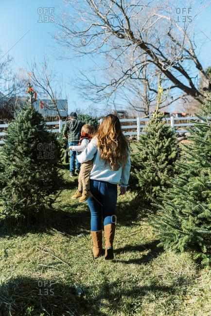 A family transporting their fresh cut christmas tree