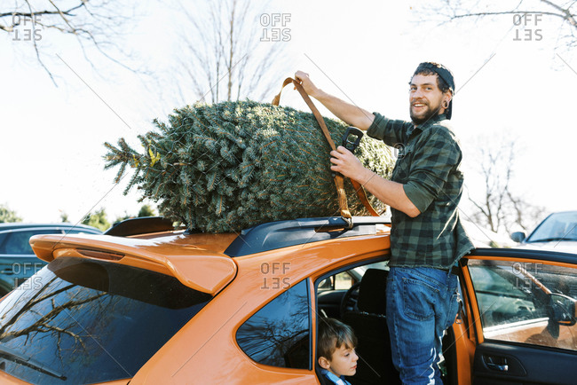A man fastening straps to prepare christmas tree for transport on car