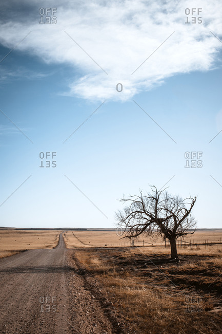 remote dirt road and lone tree, Kiowa National Grassland, New Mexico