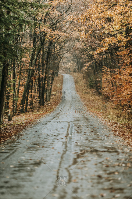 wet country road in fall covered leaves Allegheny National Forest PA