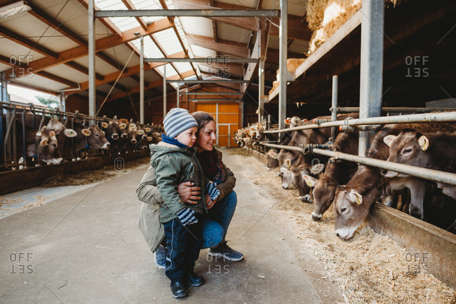 Mom and child looking at cows in barn in winter