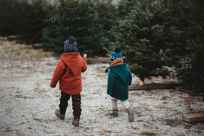 Back view of kids walking in tree farm picking Christmas tree winter