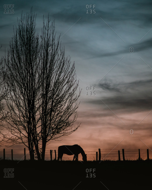 Silhouette of a lonely horse grazing during sunset next to a tree during winter