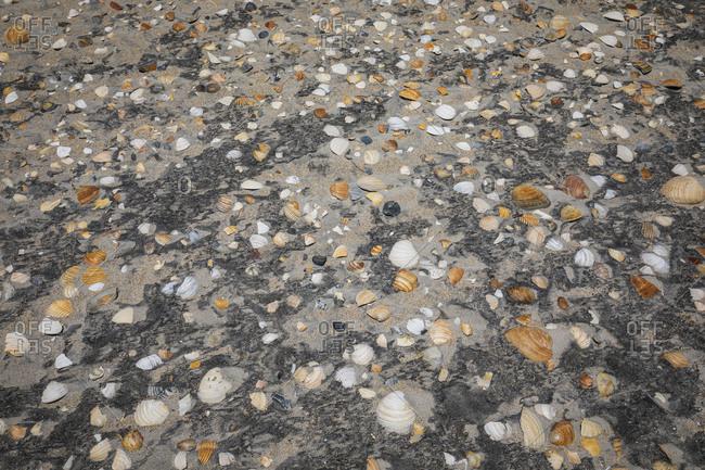 Variety of shells on beach at Cape Lookout National Seashore, Davis, North Carolina