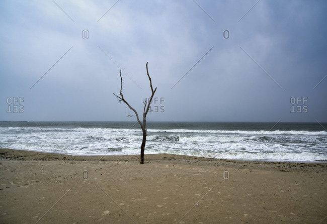 Stormy weather on an empty beach with a lonely tree in Varna, Bulgaria
