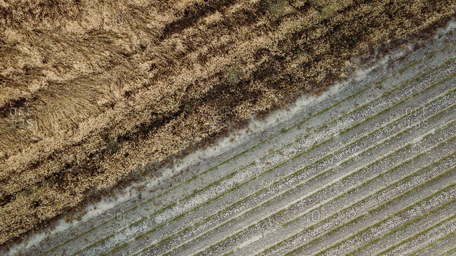 Aerial view of dried grass and green seedlings growing in waterless soil of agricultural field during drought