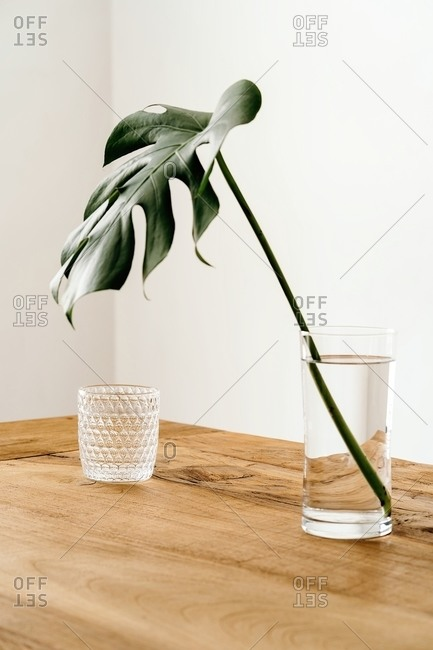 Minimalist interior with monstera stem arranged in vase with water near glass cup on wooden table