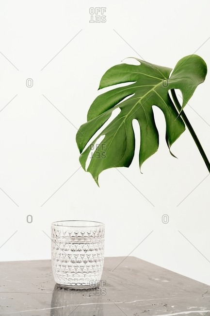Faceted glass with fresh water placed on marble table near monstera plant