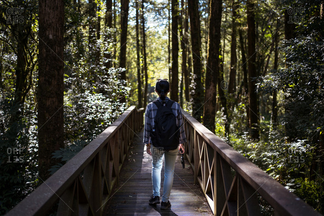 Back view of unrecognizable female tourist walking along wooden bridge in green forest during vacation in Alishan Township