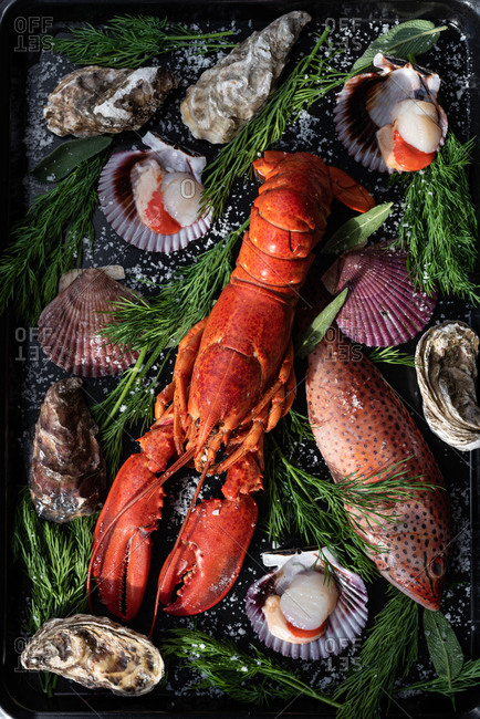From above of tasty lobster and various seashells arranged with fish and green herbs on baking pan