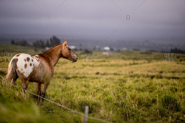 Brown and white horse stands on grassy field on gloomy day