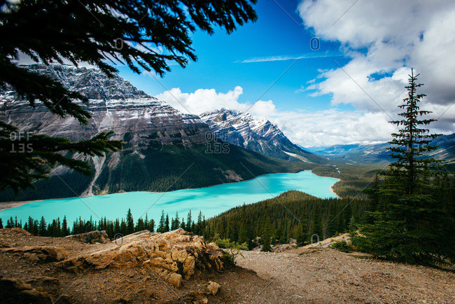 The blueish green water of peyto lake in banff national park