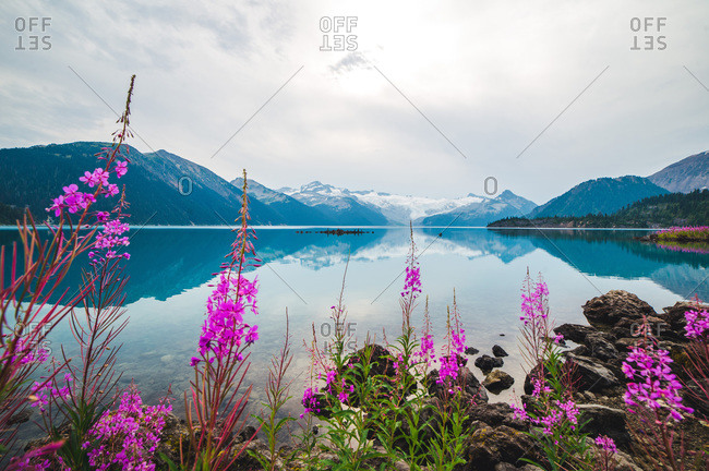 A calm alpine lake with flowers and snowy mountains