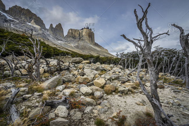 Dead trees against mountains, french valley, torres del paine national park, patagonia, chile