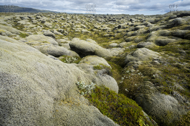 View of moss covered lava field, south iceland