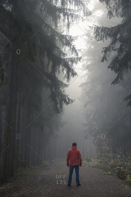 Rear view of man in red jacket standing on path in dark eerie forest on misty morning, central bohemian region, czech republic