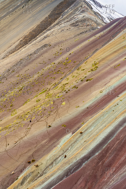 Aerial view of llamas walking on colorful slope of rainbow mountain, pitumarca, peru