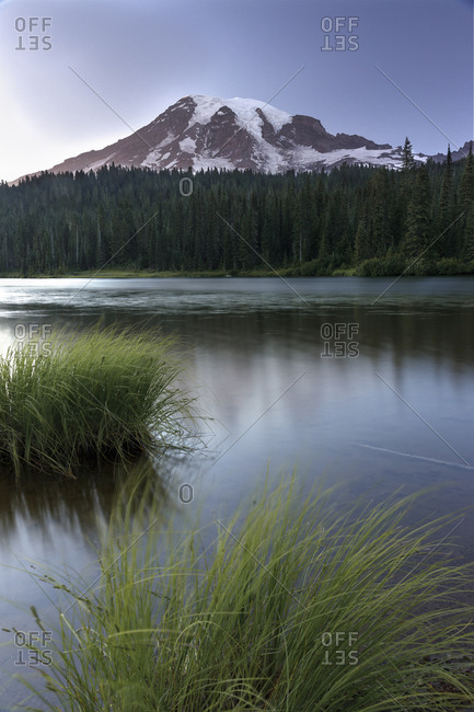 Tall water grass in front of reflection lake and mount rainier