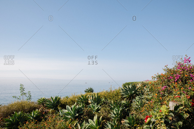 Flowers and plaints on the coast of Montecito, California