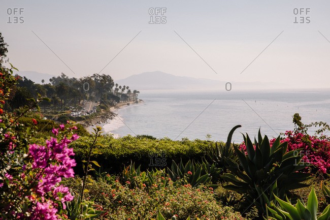 Colorful flowers on cliff overlooking Butterfly Beach on the coast of Montecito, California