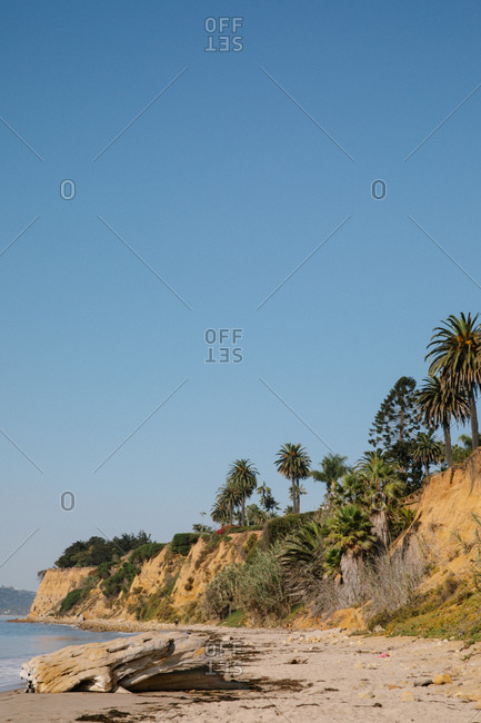 Palm trees on cliff above Butterfly Beach in Montecito, California