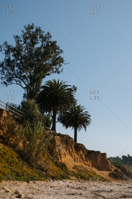 Palm trees at Butterfly Beach in Montecito, California