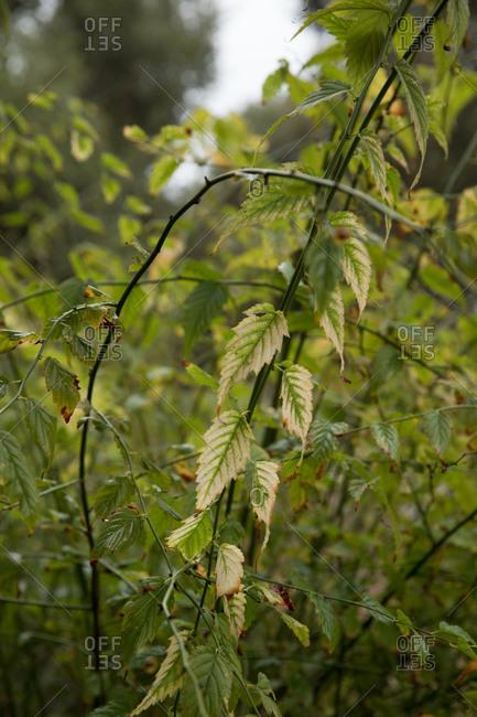 Leafy vine growing in a garden