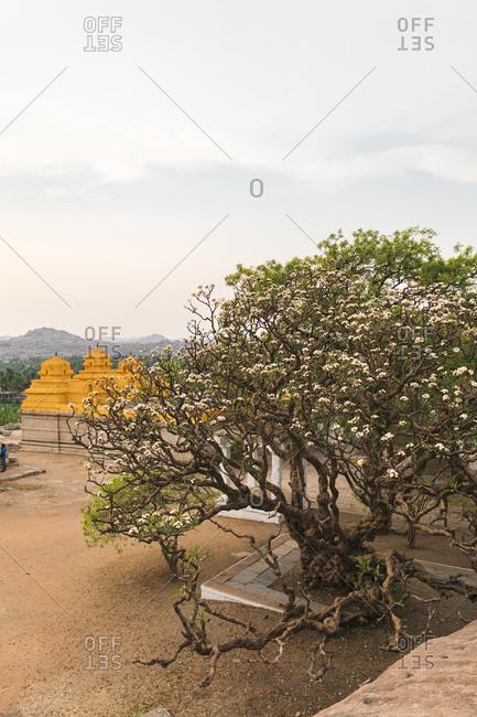 Trees with blossoms in ancient Virupaksha Temple complex in the Hampi region, Karnataka, India